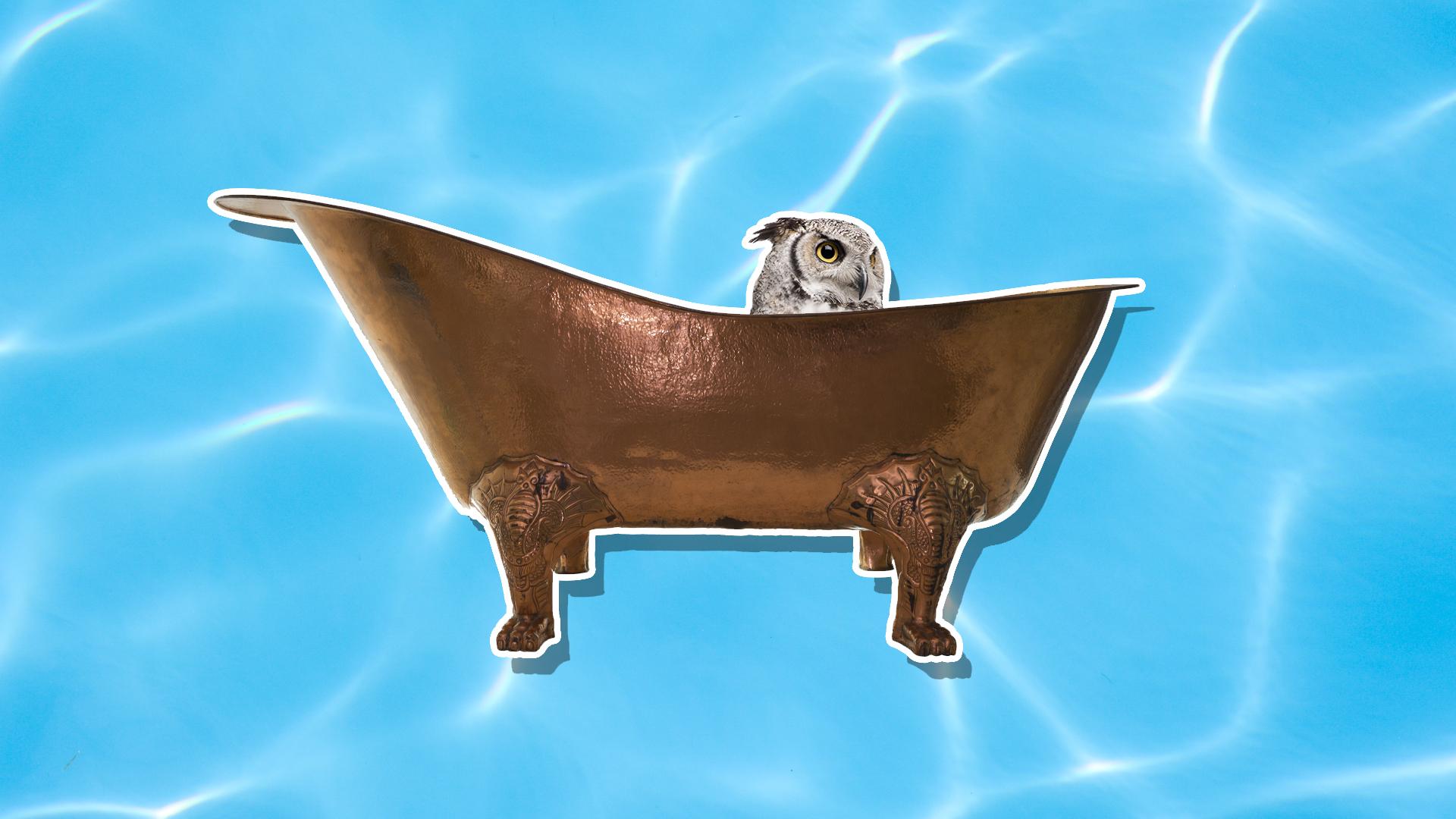 An owl in a copper bath