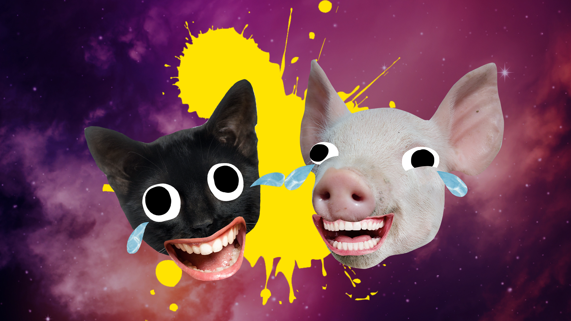 Cry laughing pig and cat