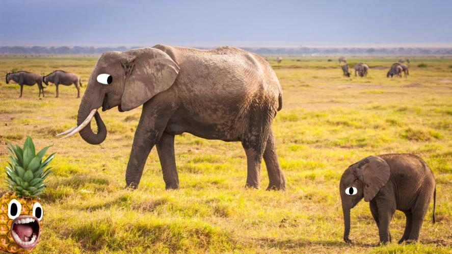 An elephant and a slightly smaller elephant