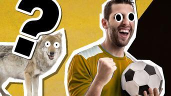 Ultimate Wolverhampton Wanderers Quiz