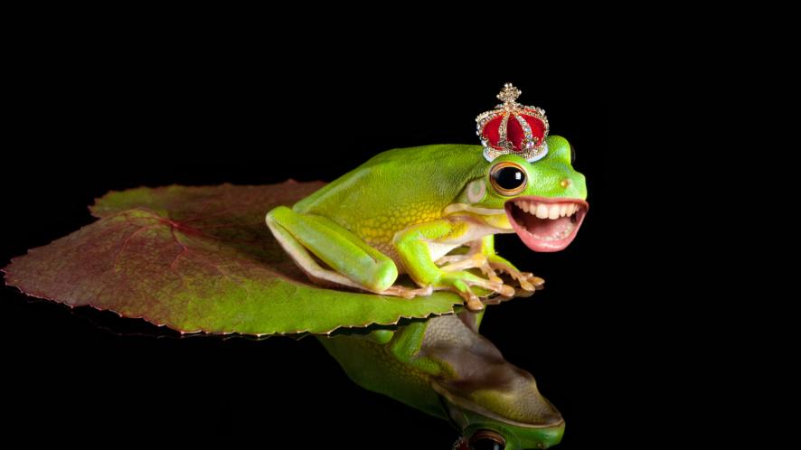 Frog in crown on leaf