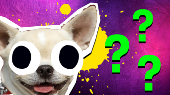 Fun dog quiz thumbnail