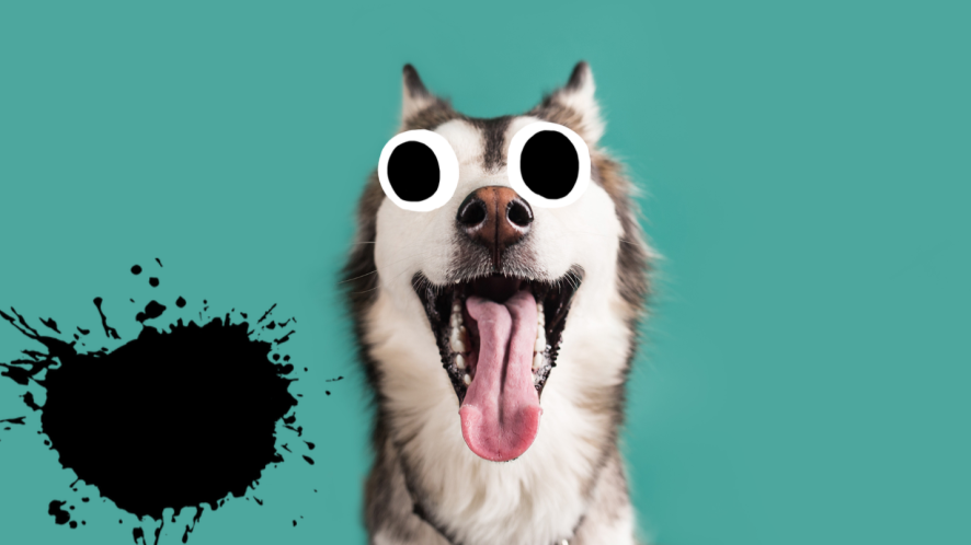 dog with tongue out