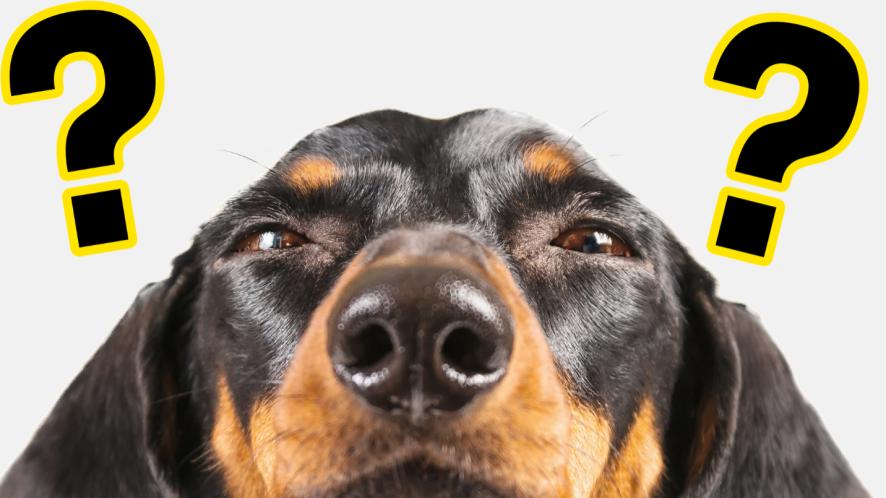 Dog up close