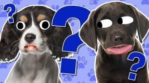 Puppy quiz