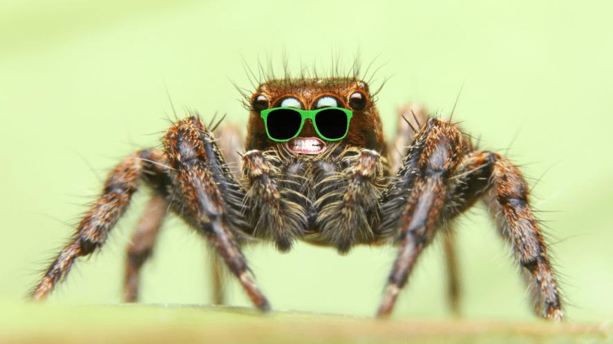A spider in sunglasses