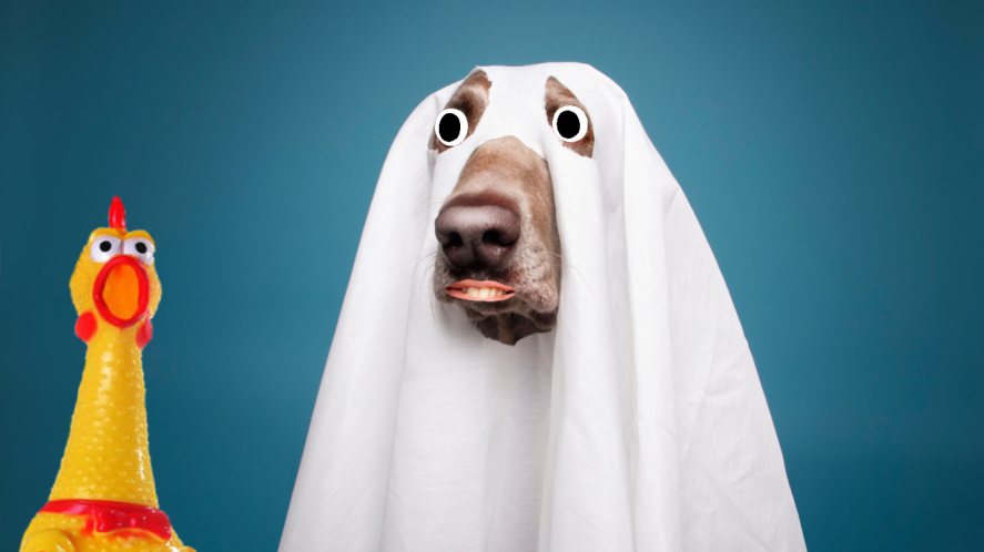 A dog dressed as a ghost, plus a frightened rubber chicken