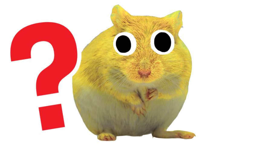 Yellow gerbil