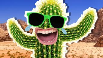 Desert Jokes
