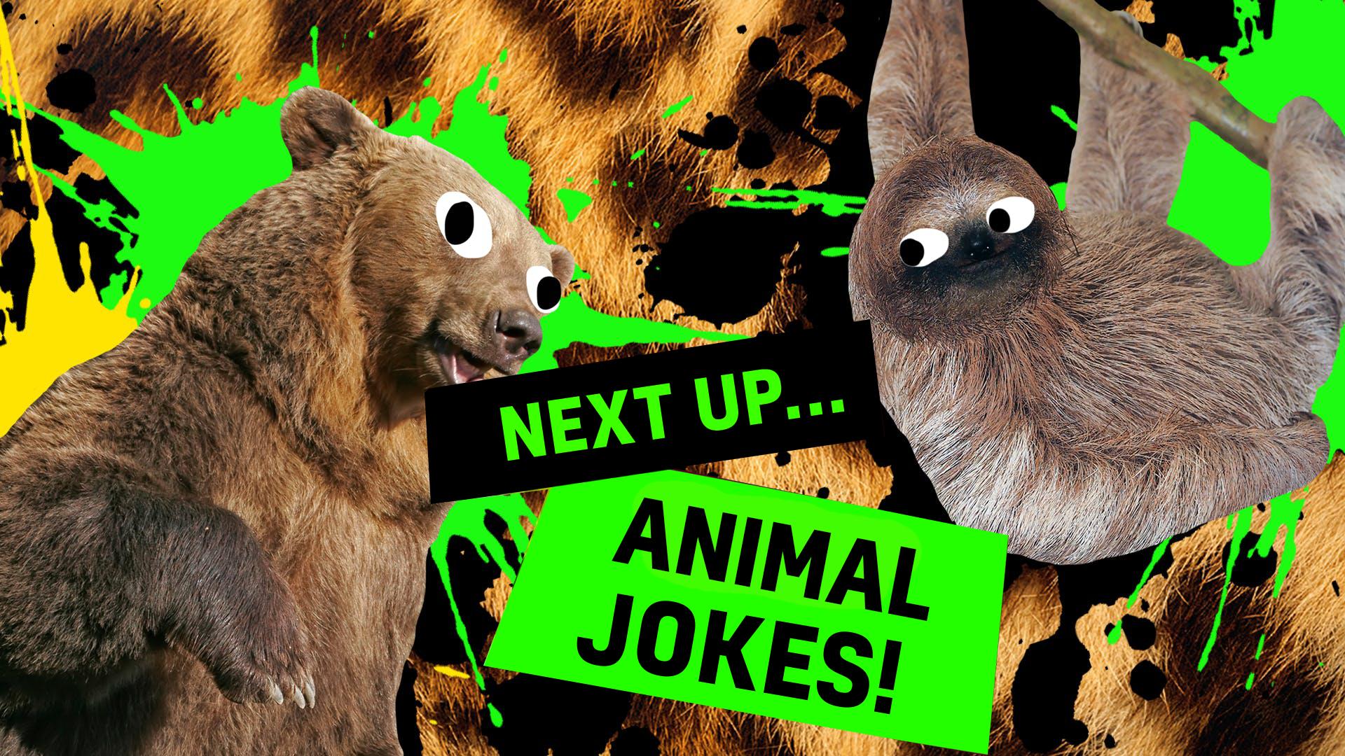 Animal jokes thumbnail
