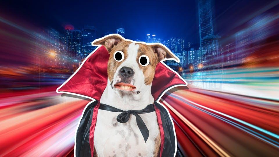 A dog dressed as Dracula