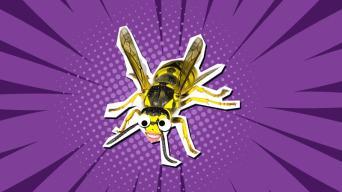 Wasp Jokes