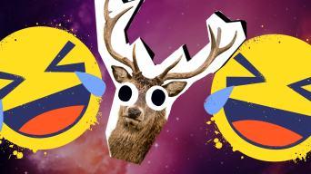 Deer Jokes