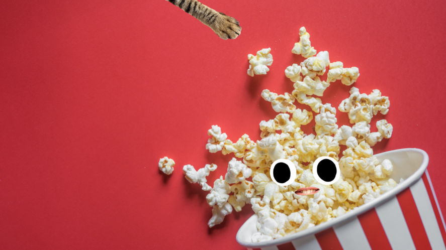 A tub of popcorn and a hungry cat's paw