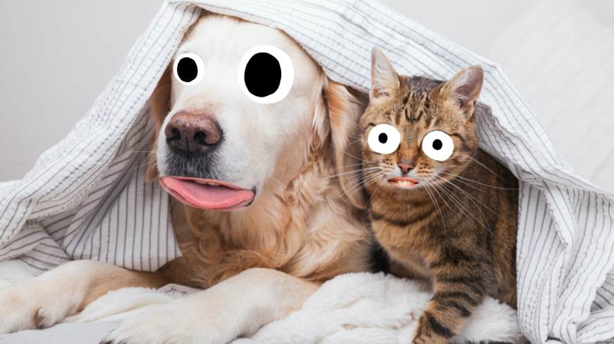A dog and a cat, who are clearly best friends