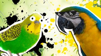 Parrot Jokes