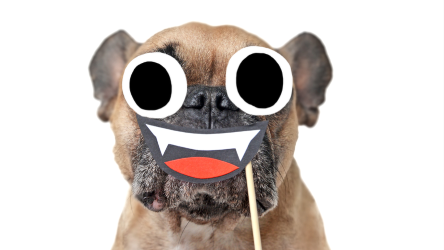 Pug with fake fangs