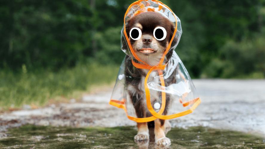 A dog in a rain coat