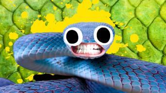 Snake Joke