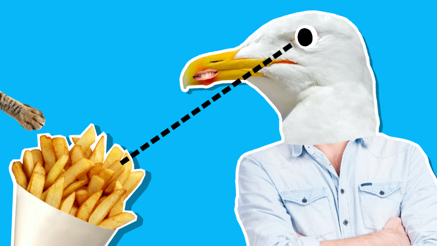 A seagull eyeing a bag of chips
