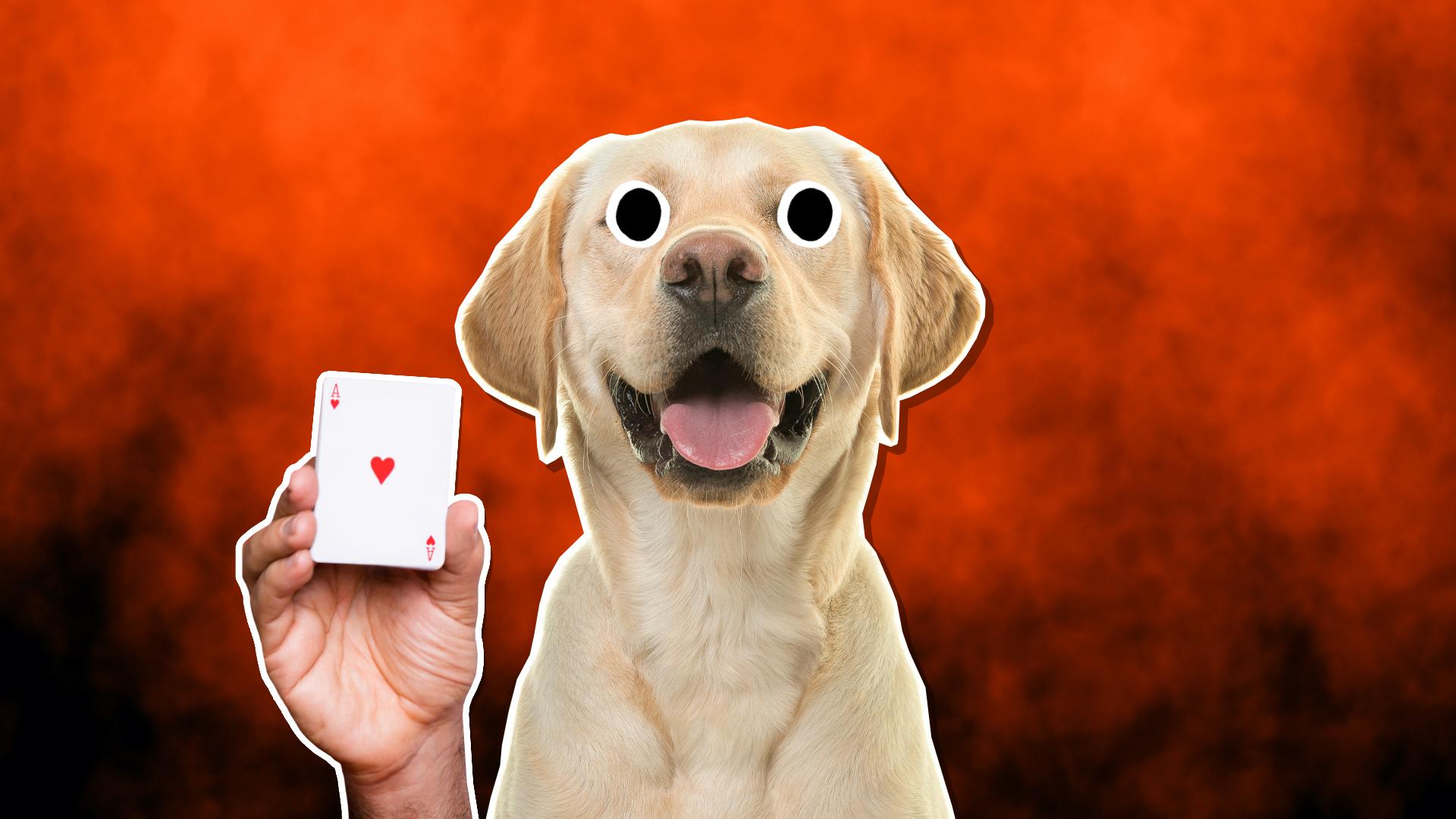 A magic dog