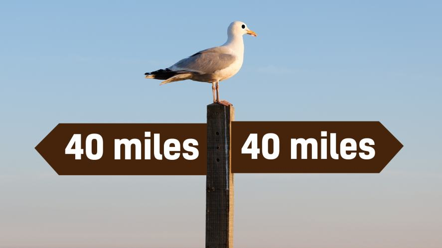 A seagull on a signpost