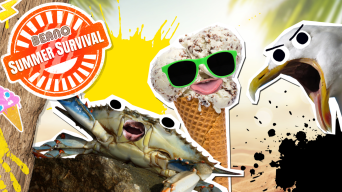 Beano Summer Survival Guide: How To Rule the Beach