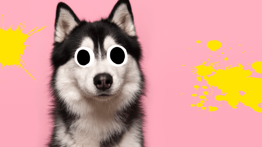 Dog on pink background