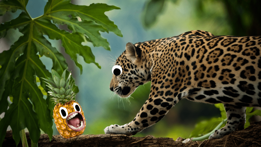 Jaguar in jungle