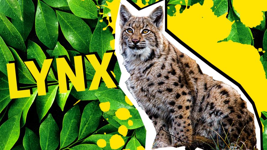Lynx result thumbnail