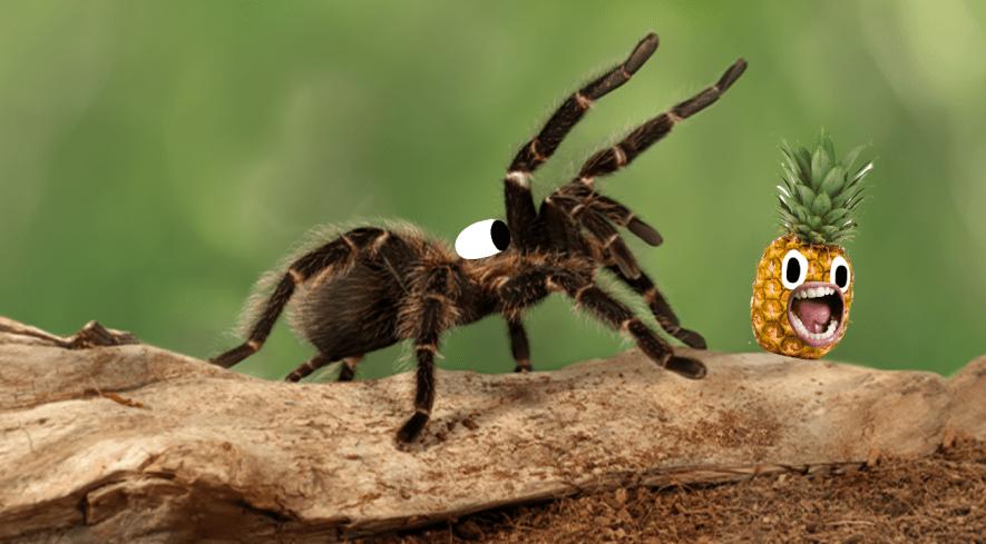 Tarantula on log with pineapple