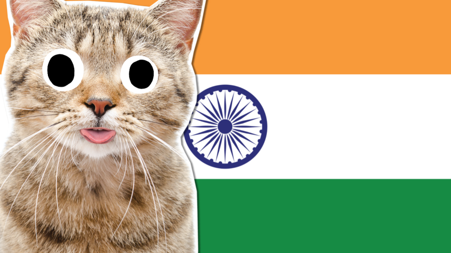 A cat and the flag of India