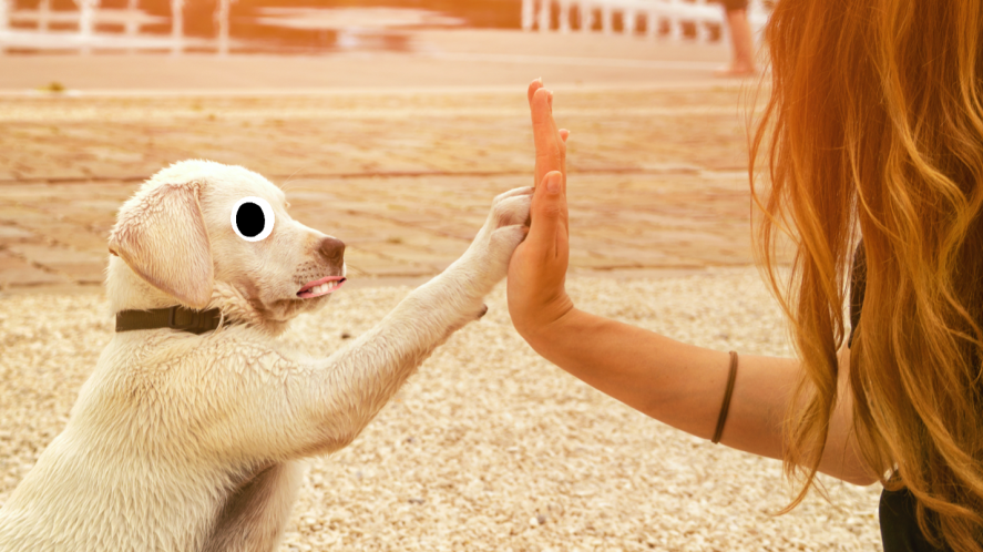A high fiving pup