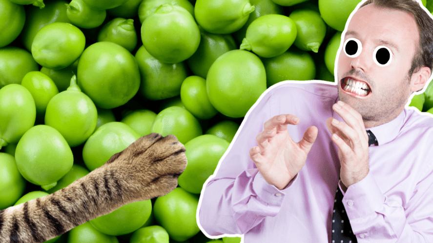 A man afraid of a cat paw or peas