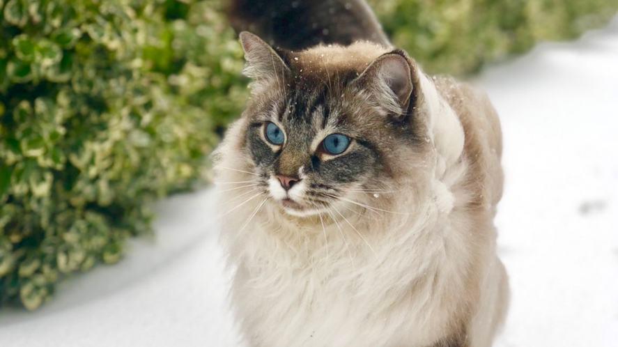 Ali-A's cat