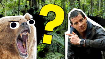 Bear Grylls Quiz