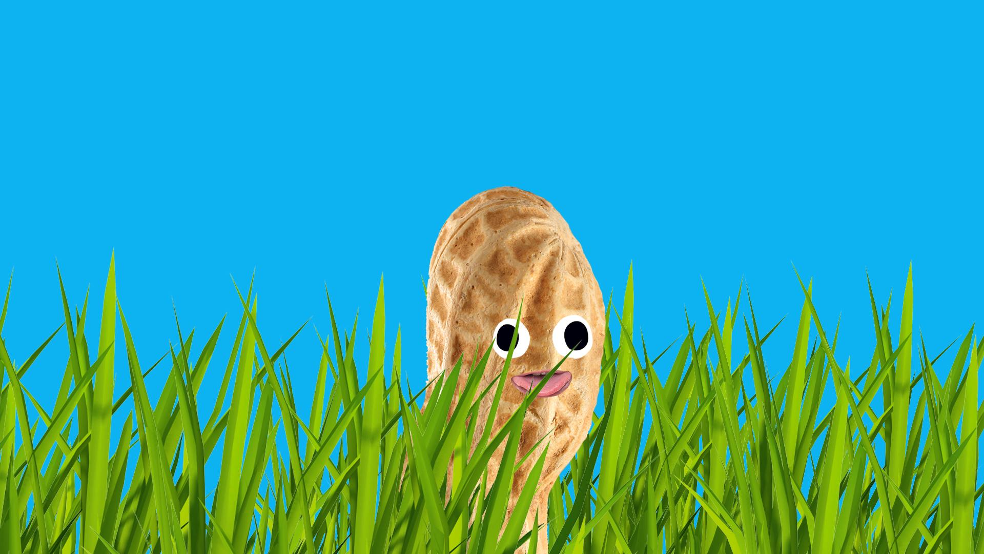 Peanut hiding in the lawn