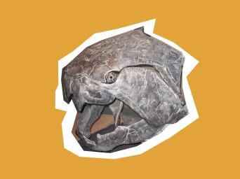 Armoured fish