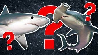 What Shark Am I? Personality Quiz