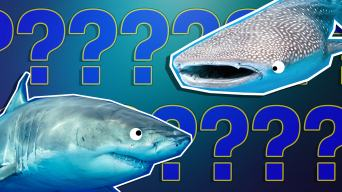 Personality Quiz: Are You Actually A Shark?