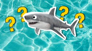 Personality Quiz: What % Shark Are You?