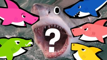 Which Baby Shark Character Are You?
