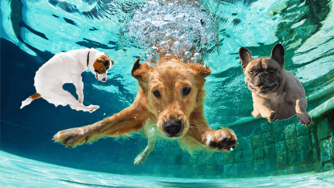 These Dogs Love to Swim!