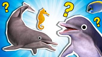 Personality Quiz: What Dolphin Are You?