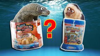Personality Quiz: Are You More Sea Monkeys or Aqua Dragons?