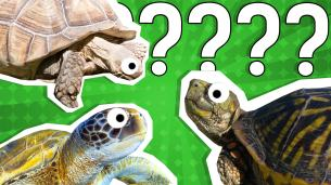 What Turtle Am I? Quiz