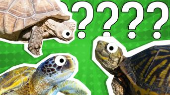 What Turtle Am I? Quiz