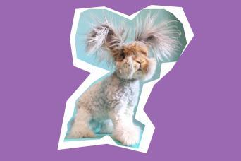 Wally the Bunny