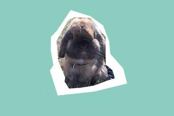 Dusty the grumpy rabbit
