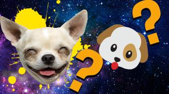 Dog emoji quiz